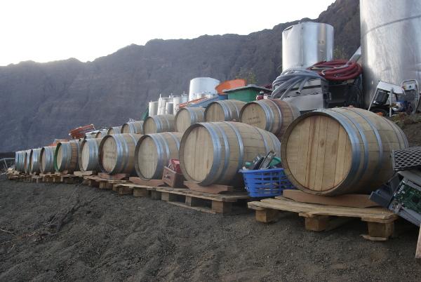 Les viticulteurs ont perdu une grande partie de leur production. (Photo : André Laurenti)