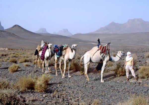Notre petite caravane s'aventure dans cet univers minéral et chaotique du Hoggar. (Photo : André Laurenti)