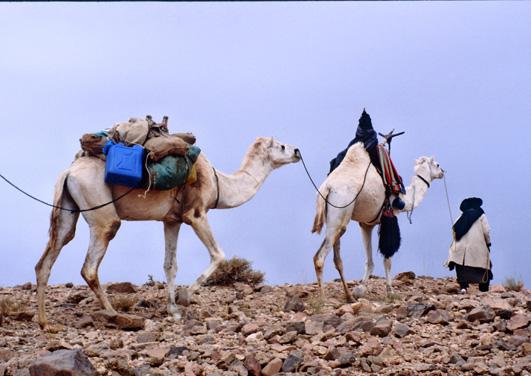 Le Hoggar se définit ainsi par ces successions d'images simples. (Photo : André Laurenti)