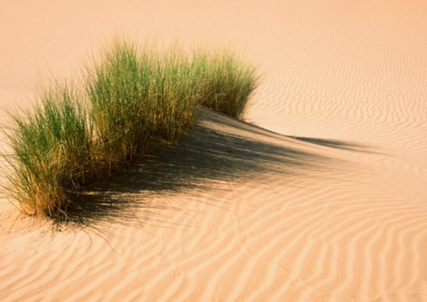 Aucun climat ne semble poser des difficultés à la vie. (Photo : André Laurenti)