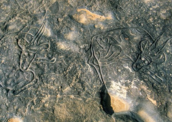 Des gravures rupestres du plateau de Dider sont d'une finesse inouïe, ici une scène représentant des gazelles. (Photo : André Laurenti)