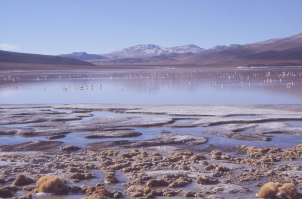 Laguna Colorada. (Photo : André Laurenti)