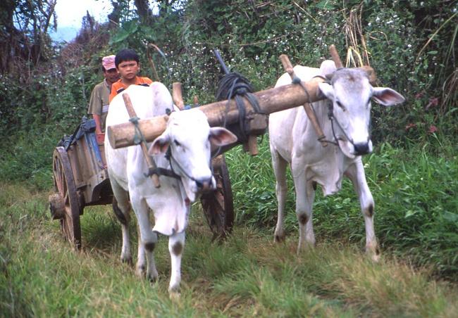 Sur le chemin du Mahawu. (Photo : André Laurenti)