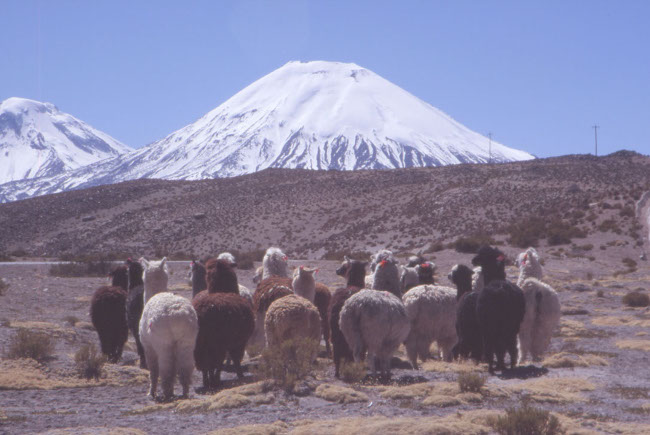 Le volcan Parinacota. (Photo : André Laurenti)