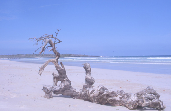 La baie des Tortues au sud-ouest de Puerto Ayora sur l'île de Santa Cruz. (Photo : André Laurenti)