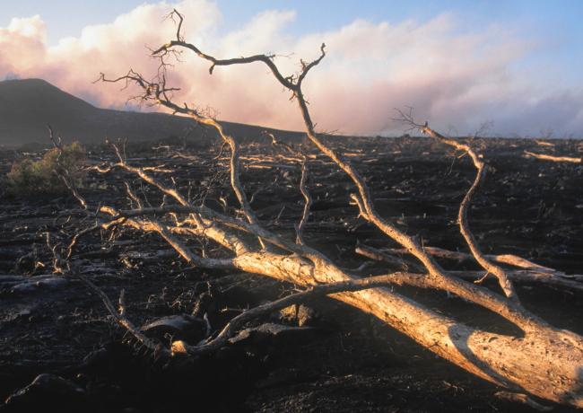 """Les laves fluides ont tendance à """"bétonner"""" le sol. Il faudra plusieurs décennies pour que la nature reprenne le dessus. (Photo : André Laurenti)"""