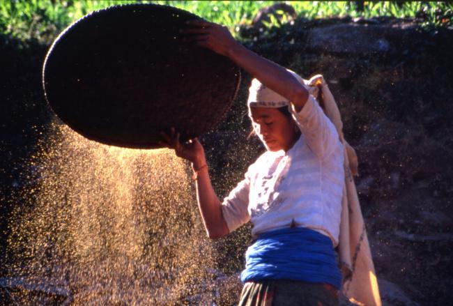 Un moment idéal pour éventer le grain. (Photo : André Laurenti)