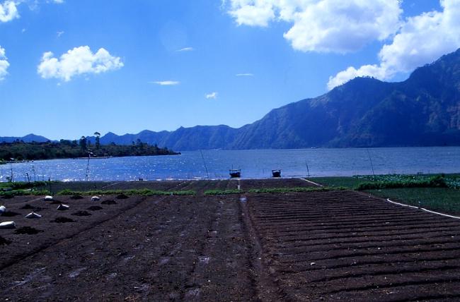 La caldeira du Batur est occupé par un lac. (Photo : André Laurenti)