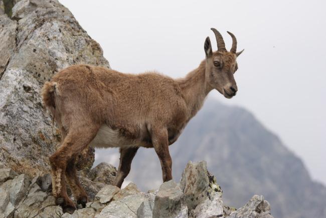 La mère jette un coup d'œil sur le versant italien. (Photo : André Laurenti)