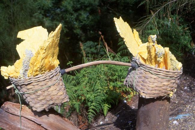 Les paniers peuvent atteindre 80 kg (Photo : André Laurenti)