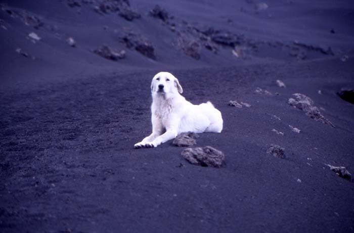 Black and white Il n'est pas rare qu'un chien vous suive sur l'Etna. (Photo : André Laurenti)