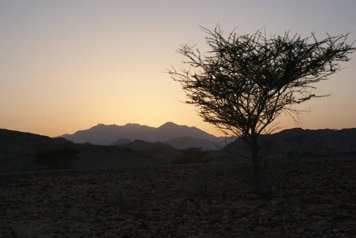 La nuit tombe au pied du fumeur noir, l'acacia du désert se détache en ombre chinoise. (Photo : André Laurenti)