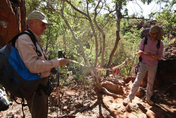 La mue d'un serpent découvert dans un arbre. (Photo : André Laurenti)