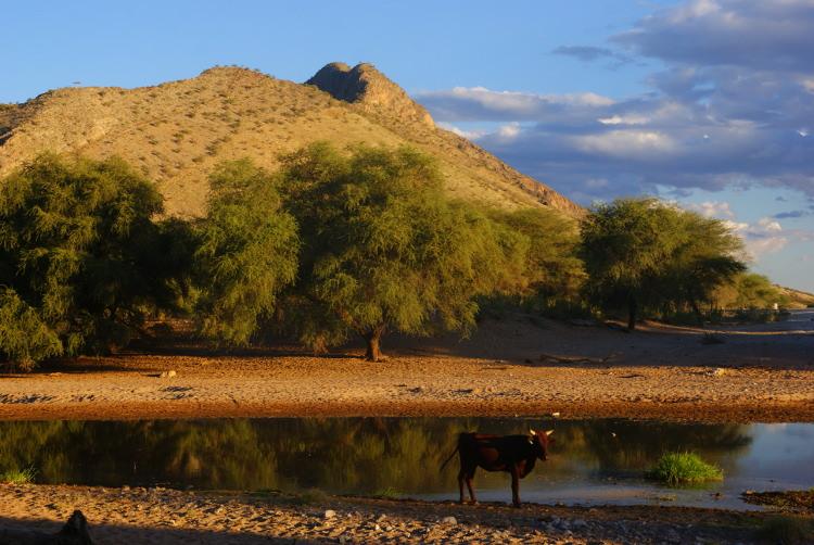 L'eau est une aubaine pour les troupeaux. (Photo : André Laurenti)