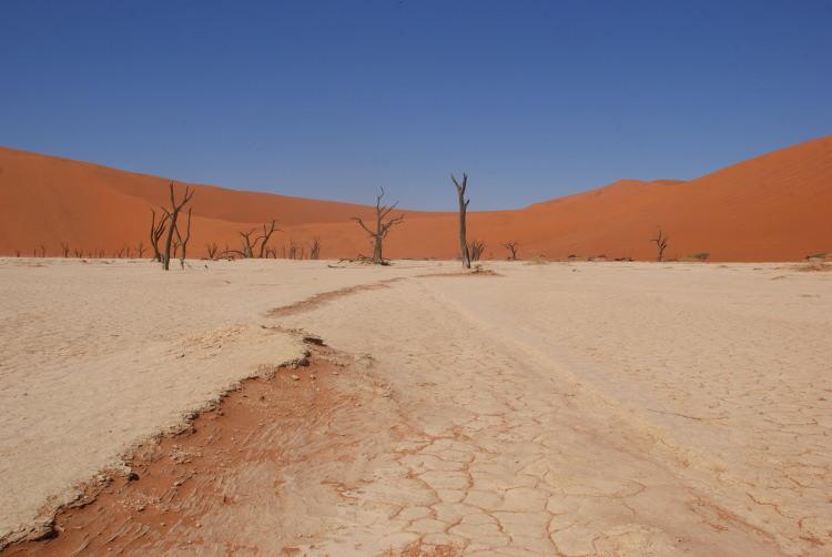Dunes (Photo : André Laurenti)