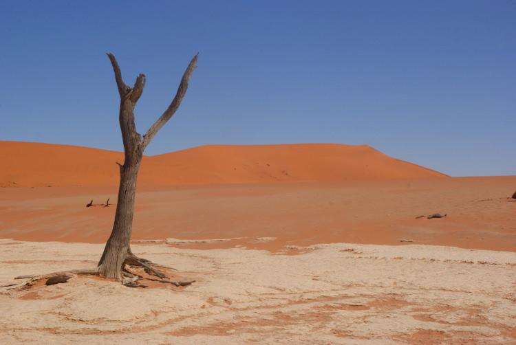 Dune (Photo : André Laurenti)
