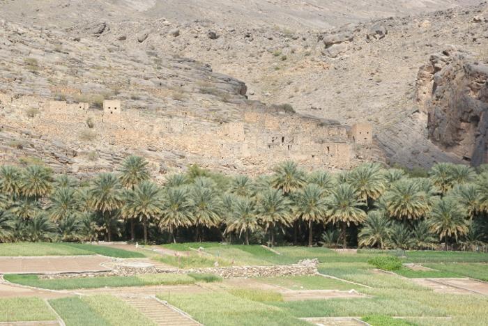 Au dessus de la palmeraie, un ancien village se fait discret. (Photo : André Laurenti)
