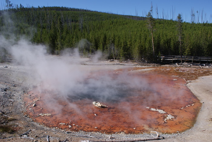 Le fer, l'arsenic, le manganèse et l'aluminium se trouvent dans les dépôt d'Echinus Geyser hautement acide. Tout comme son voisin le Steamboat Geyser, il jaillit rarement (Photo : André Laurenti)